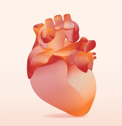 line art of human anatomical heart. Vector illustration.