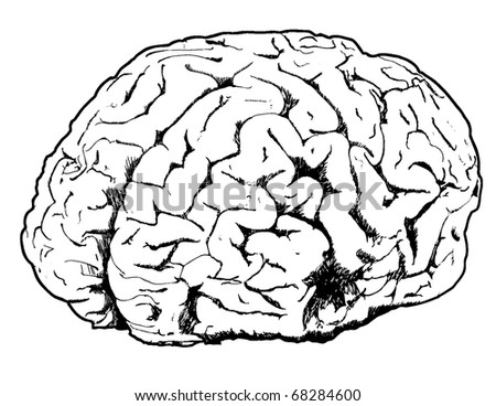 Line drawing of a brain
