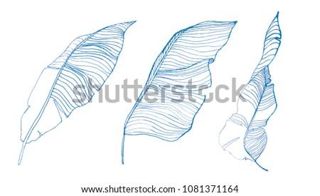 line drawn leaves illustration