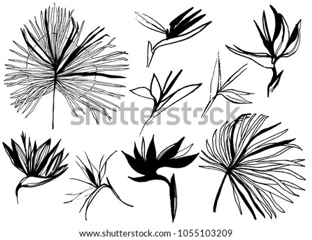 line drawn vector tropical leaves. bird of paradise flower outline. hand drawn vector contour drawing. set of plants. monochrome etching botanical draft sketch isolated on white background.