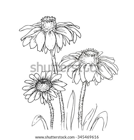line ink drawing of flowers