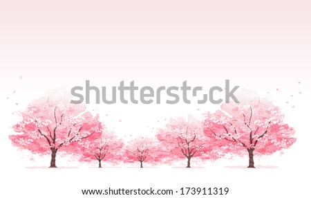 line of cherry blossom tree