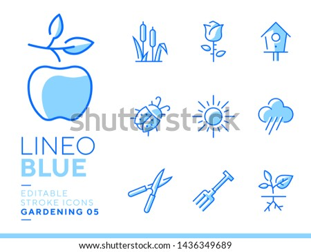 lineo blue   gardening and
