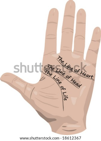 lines of hand  palmistry