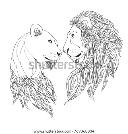 Lion and Lioness nosing on withe background. Zen vector illustration