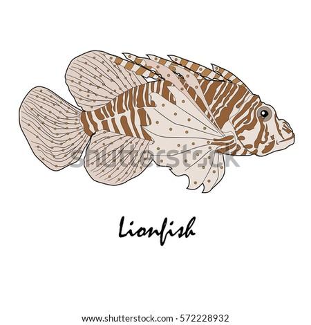 Lion Fish Saltwater Aquarium Fish Vector Illustration Ez Canvas