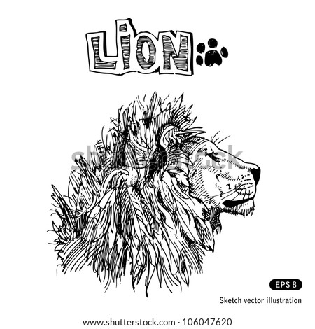 Lion. Hand drawn sketch illustration isolated on white background