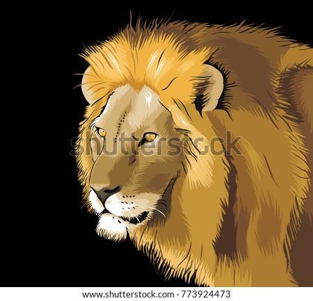 lion illustration creative