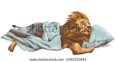 lion sleeping under a blanket