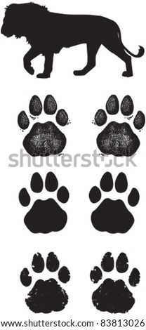 Lion Tracks or Spoor