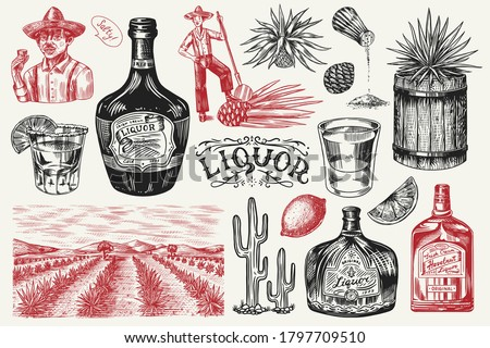 Liquor bottle, shot with lime, blue agave Plant, barrel and root ingredient, farmer and harvest. Engraved hand drawn vintage sketch. Woodcut style. Vector illustration for menu or poster.