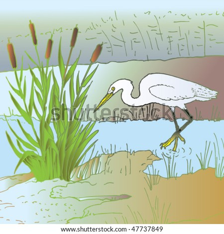 little egret hunting