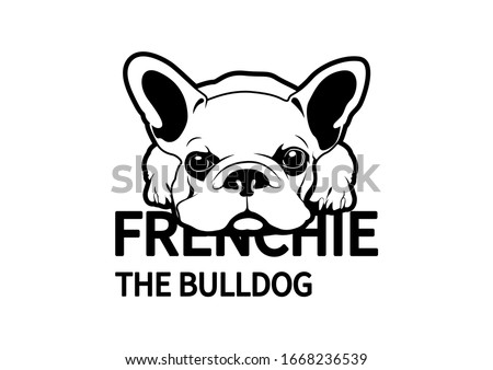 little frenchie lay down on the