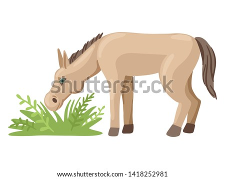 little horse grazes in a