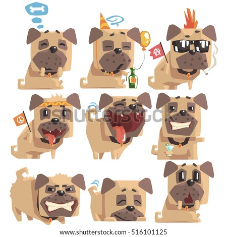 little pet pug dog puppy with