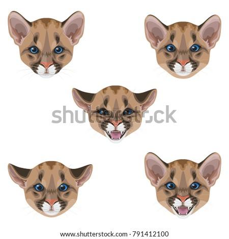 little puma muzzle setyoung