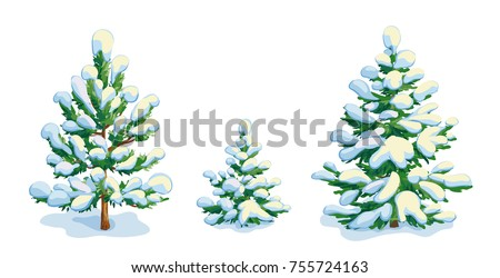 little snow covered pine tree