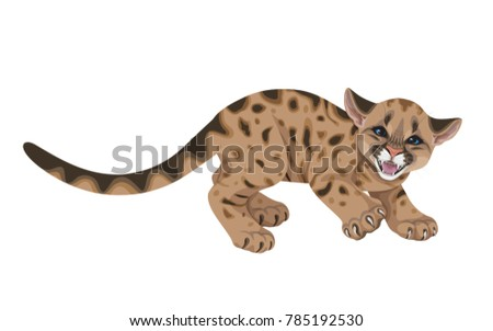 little spotted angry puma  with