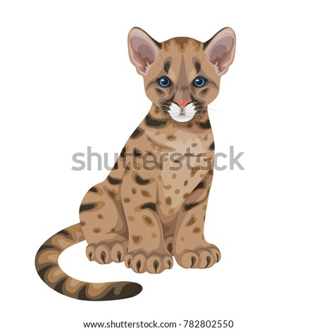 little spotted puma  with blue