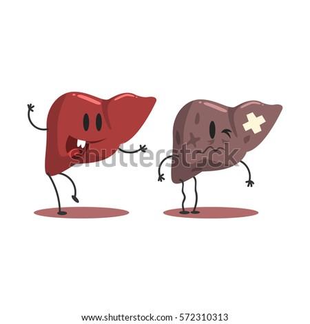 liver human internal organ