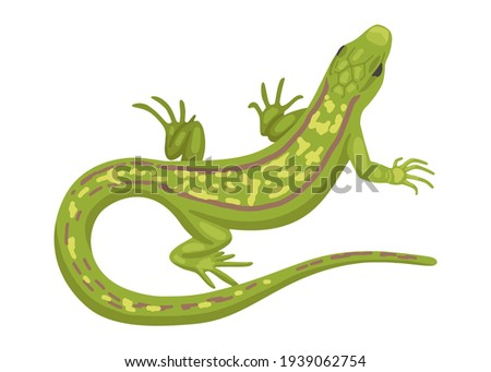 Lizard, a green small reptile, a species of common lizard. Vector animal isolated on white background, cartoon illustration Foto stock ©