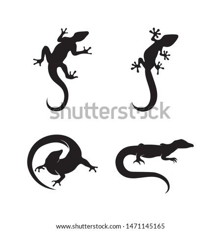 lizard vector design animal and