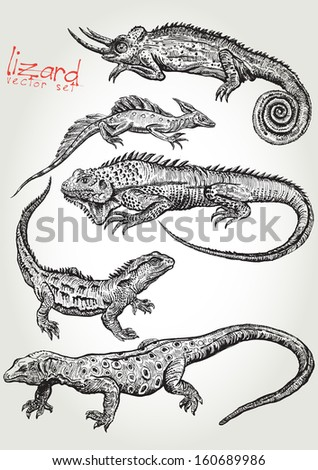 lizard vector set 1