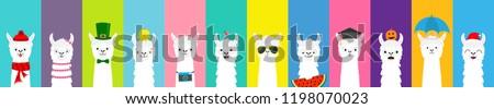 Llama alpaca set. Cute funny cartoon lama character. All seasons. Happy Valentines Christmas St Patrick day Easter Egg Bird Chicken Umbrella Santa hat, sun Flat design Colorful background Vector