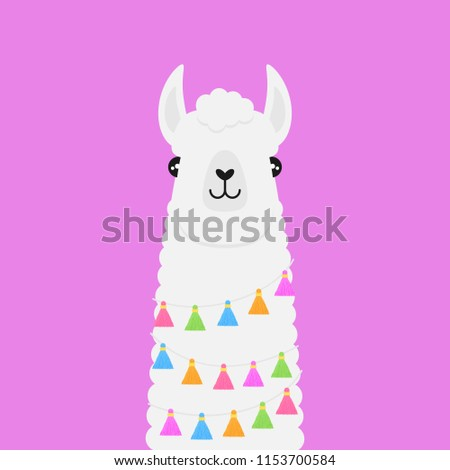 Llama, white fluffy alpaca vector graphic illustration, isolated on violet background. Llama head with colorful tassels on string around neck.