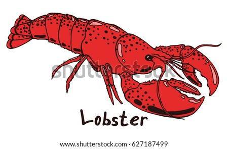 Lobster with claws. Hand drawn isolated illustration with the inscription on a white background