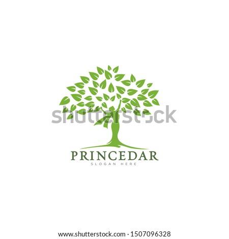 logo princedar for betwen