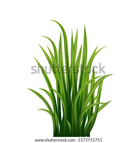 long blades of green grass