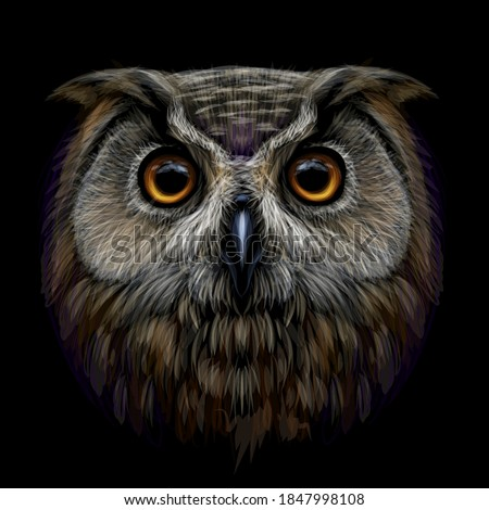 Long-eared Owl. Color, graphic  portrait of an owl on a black background. Digital vector drawing