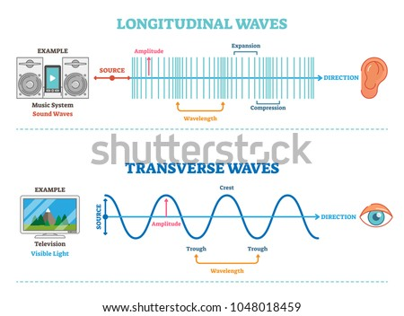 longitudinal and transverse