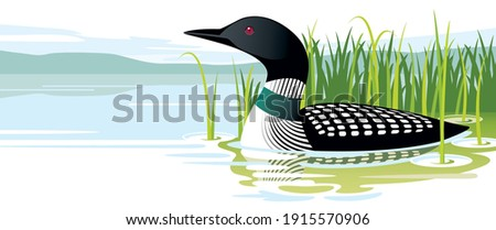 loon swimming near lake shore by tall grasses  Stockfoto ©