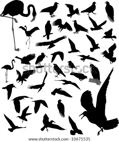 Lot of vector silhouettes of birds - stock vector