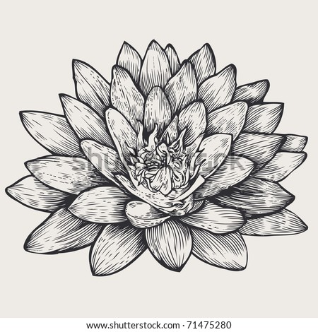 lotus, floral design element, engraved retro style. vector illustration