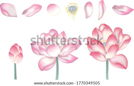 Lotus in ink painting, Chinese Lotus,Chinese Lotus petals,Lotus in ink painting, Vector of hand drawn lotus flowers. Sketch floral botany collection in graphic, Business floral card template.