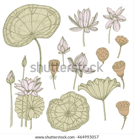 lotus pattern retro vector