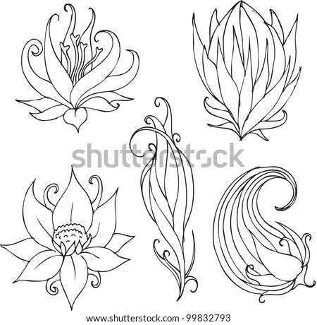 lotus swirls
