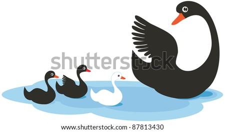 lovely family of swans  vector