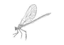Low poly art of a dragonfly in black color wireframe. Vector animal triangle geometric illustration. Abstract polygonal art. With white color background.