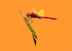 Low poly bold framed art of a red dragonfly in high details. Vector animal triangle geometric illustration. Abstract polygonal art. With orange color background.