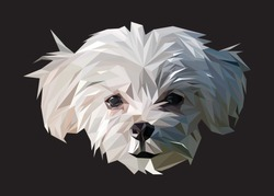 Low poly vector head of a maltese in high details. Object triangle geometric illustration. Abstract polygonal art. With black color background. Ideal for illustration, posters or t-shirts.