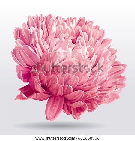luxurious pink vector aster