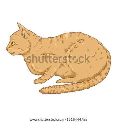 Lying Cat. Vector Cartoon Feline Illustration