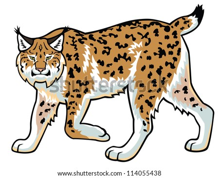 lynx,bobcat,,wildcat,vector image,side view picture isolated on white background