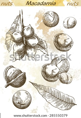 macadamia nut set of vector sketches on an abstract background