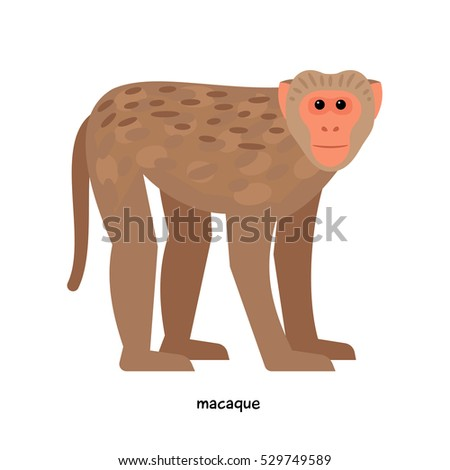 macaque   one of the most