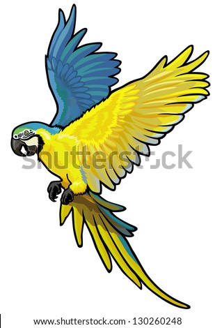 macaw, ara ararauna, blue and yellow parakeet of amazon rainforest, picture isolated on white background, vector illustration